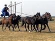 národní parky a zahrady - Maďarsko - NP Hortobágy - Kochova pětka, ukázka vrcholného jezdeckého umění maďarských pastevců - čikošů