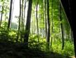 národní parky a zahrady - Maďarsko - NP Bukové hory - krásné bukové lesy dělají pohoří čest a jméno